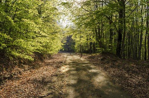 Trees, Forest, Nature, Landscape, Light, Autumn, Path