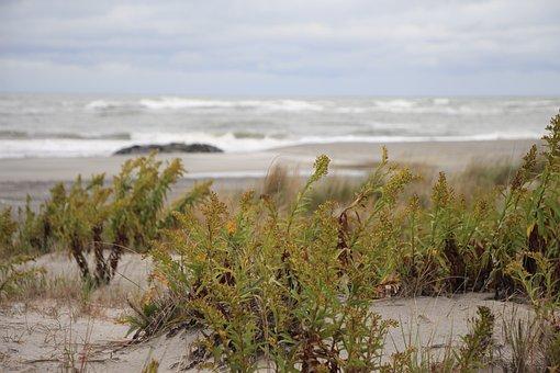 Ocean, Sea, Seascape, Bushes, Dunes, Sand Dune, Wave