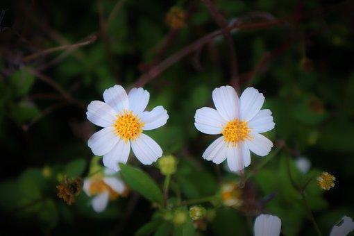 Flowers, White, Nature, Bloom, Blossom, Garden, Plant