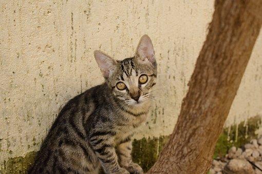 Cat, Kitten, Michi, Animals, Cute, Pet, Kitty, Feline