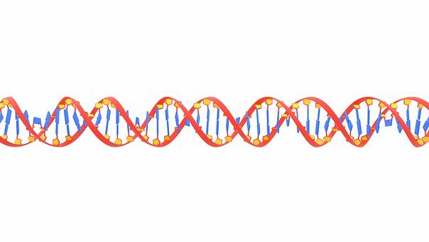 Dna, Science, Biology, Research, Health, Gene, Helix