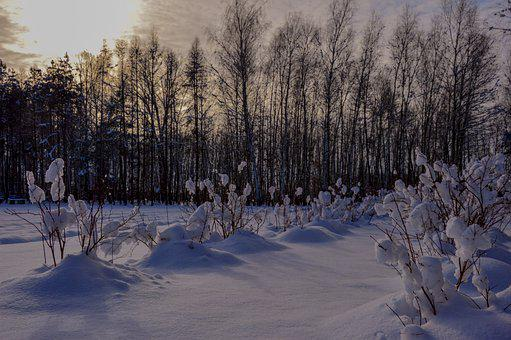 Winter, Snow, Snowy, Shrubs, Cold, Landscape, Nature