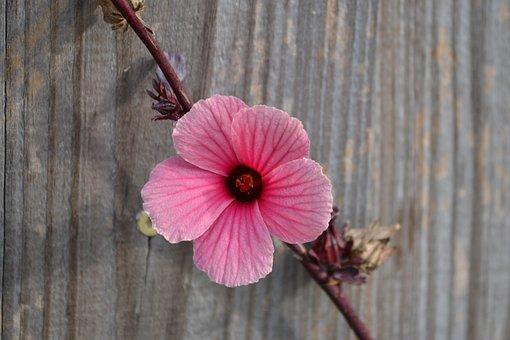 Flower, Garden, Plant, Spring, Rain, Art