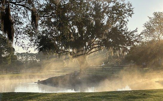Morning, Farm, Sunrise, Landscape, Nature, Agriculture