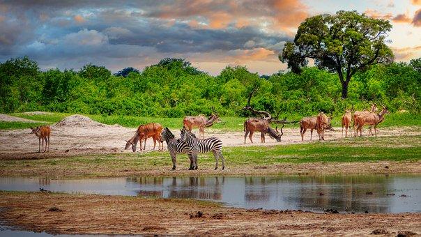 Antelope, Zebras, Potions, Lake, Pond, Water, Drink