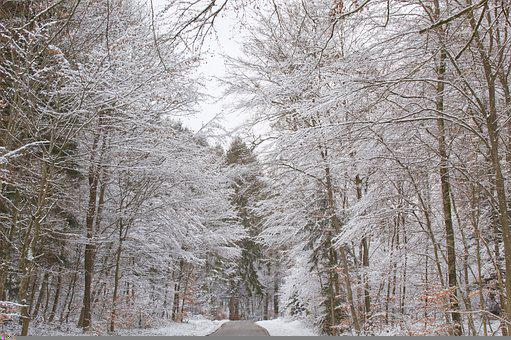 Winter Road, Snow, Away, Wintry, Nature, Cold, Forest