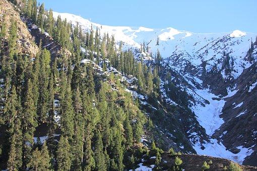 Mountains, Trees, Snow, Conifers, Coniferous