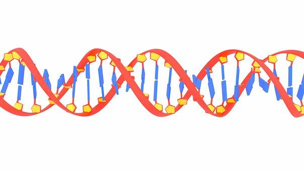 Dna, Double Helix, Genetics, Science, Chromosome, Gene