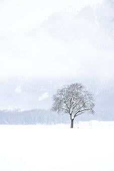 Snow, Winter, Tree, Landscape, Nature, White, Bare Tree