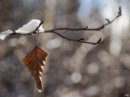 Leaf, Drip, Frozen, Ice, Winter, Nature, Water