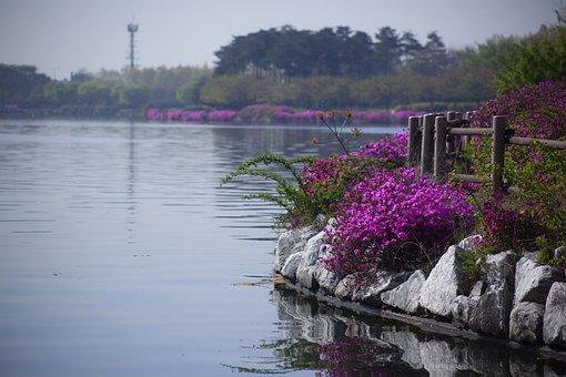 Lake, Park, Azaleas, Flowers
