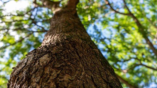 Big Tree, Park, Tree, Bark, Trunk, Tree Trunk
