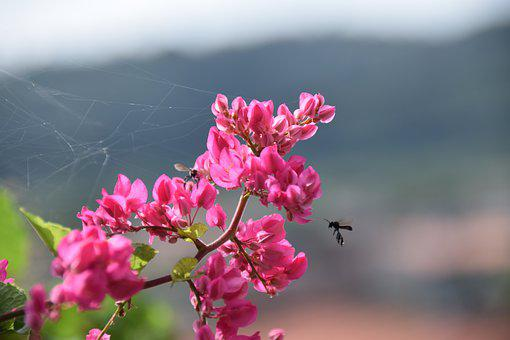 Pink Flowers, Bees, Pollinate, Pollination