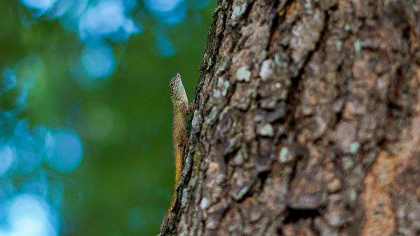 Lizard, Reptile, Tree, Bark, Trunk, Tree Trunk