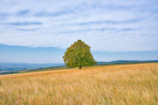 Tree, Meadow, Autumn, Nature, Field, Landscape, Clouds