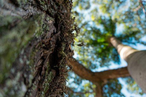 Moss, Bark, Tree, Trunk, Big Tree, Wood, Park, Forest