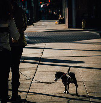 Street, Photography, City, Urban, Pavement, Sidewalk