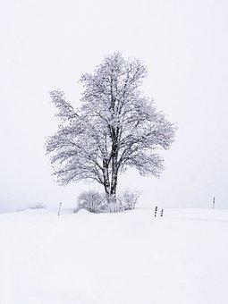 Winter, Tree, Nature, Snow, Landscape, Wood