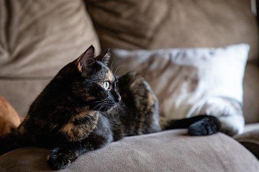 Cat, Kitten, Pet, Feline, Domestic, Domestic Cat