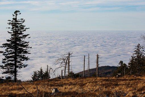 Waldsterben, Climate Crisis, Black Forest, Clouds
