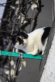 Cat, Magpie Cat, Stray Cat, Street Cat, Domestic Cat