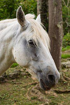 Horse, Animal, Stallion, Equestrian, Farm, Equine