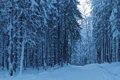 Winter, Forest, Trees, Woods, Woodlands, Forest Path