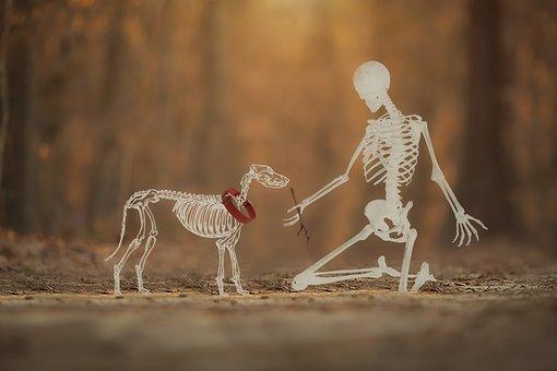 Skeleton, Man, Dog, Dog Owner, Autumn, Friendship