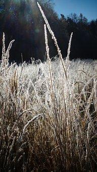 Grasses, Field, Hoarfrost, Sunlight, Frozen, Frost, Ice