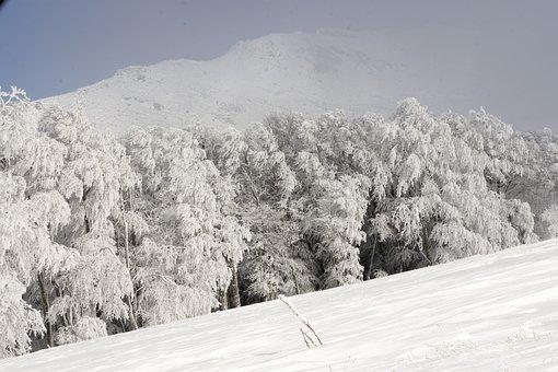 Winter, Trees, Snow, Frozen, Mountain, Landscape