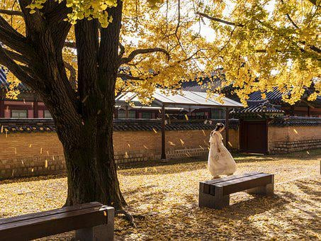 Gyeongbok Palace, Woman, Autumn, Tree, Leaves, Benches