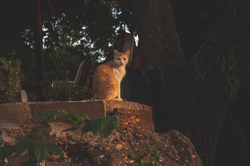 Cat, Pet, Sunset, Animal, Domestic Cat, Feline, Mammal