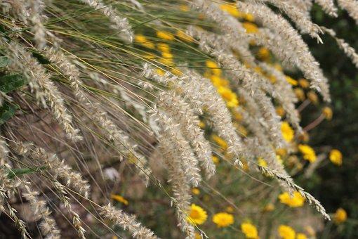 Grass, Grasses, Flowers, Meadow, Nature, Summer