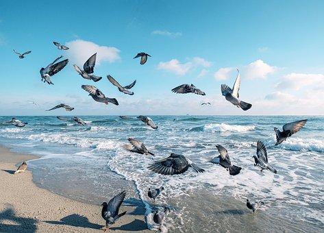 Sea, Pigeons, Beach, Birds, Nature, Sky, Water, Pigeon