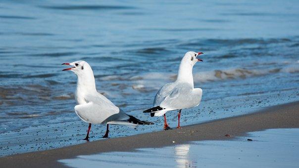 Seagulls, Beach, Sand, Sea, Ocean, Shore, Birds, Avian