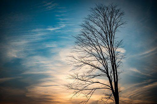 Tree, Branches, Sunset, Clouds, Sky