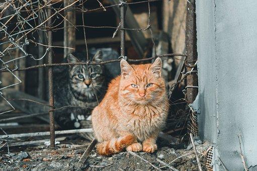 Cats, Stray Cats, Tabby, Street Cats, Domestic Cats