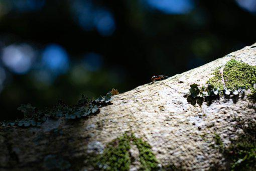Ant, Small Animal, Insect, Tree Branch, Nature, Tree