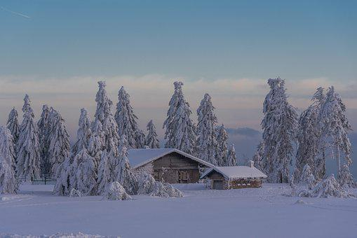 House, Winter, Snow, Trees, Village, Cold, Wintry, Fog