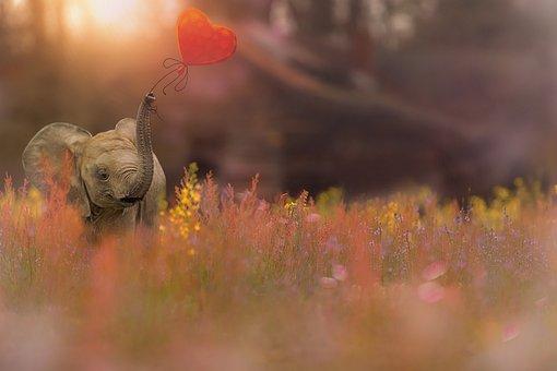 Elephant, Baby Elephant, Valentine, Flowers Field