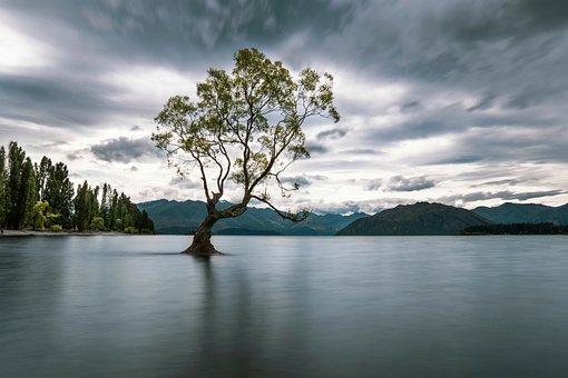 Thatwanakatree, That, Wanaka, Tree, Water, Lake
