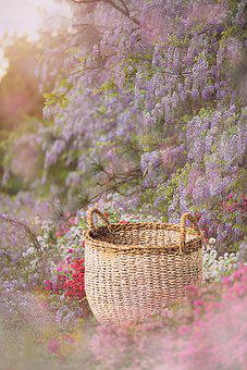 Basket, Flowers, Background, Beauty, Bloom, Blossom