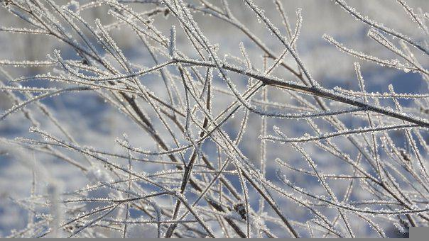 Frost, Branches, Bare Tree, Hoarfrost, Snowy, Snow