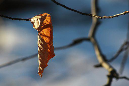 Leaf, Branch, Tree, Withered, Warm, Light, Sun, Autumn