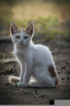 Cat, Stray Cat, Kitten, Young Cat, Animal, Street Cat