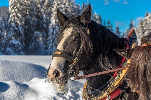 Horse, Snow, Bridle, Cold, Winter, Frozen