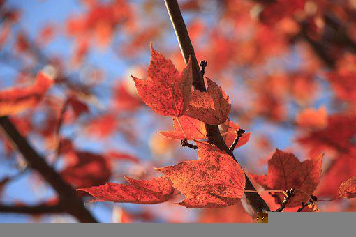 Leaves, Branch, Fall, Foliage, Bright, Autumn, Sunlight