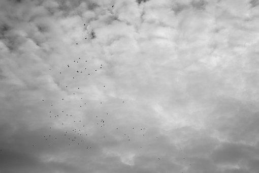 Birds, Flight, Clouds, Migratory Birds, Flying Birds