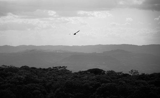 Bird, Flight, Mountains, Sky, Clouds, Trees, Forests