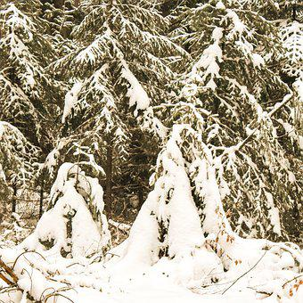 Winter, Snow, Nature, Outdoors, Forest, Trees, Tree